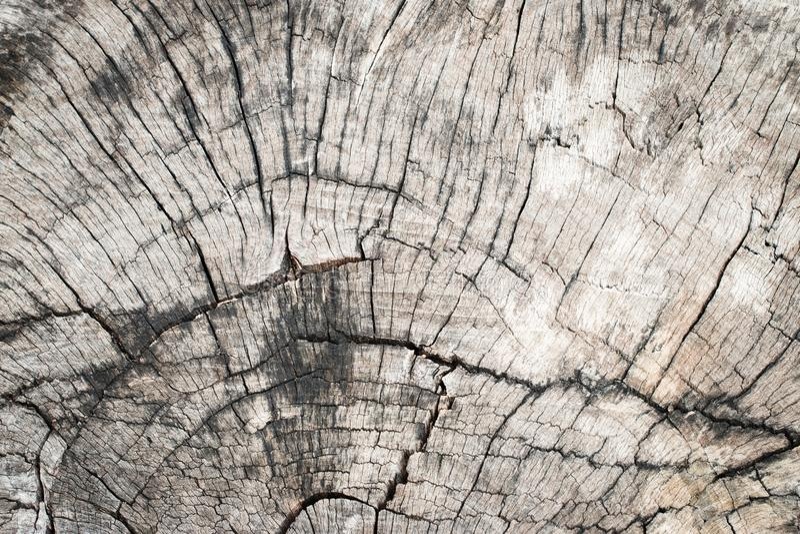 Textura rachada da madeira velha do coto exterior foto de stock royalty free