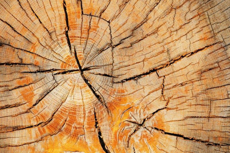 Textura rachada velha do corte do tronco de árvore fotos de stock