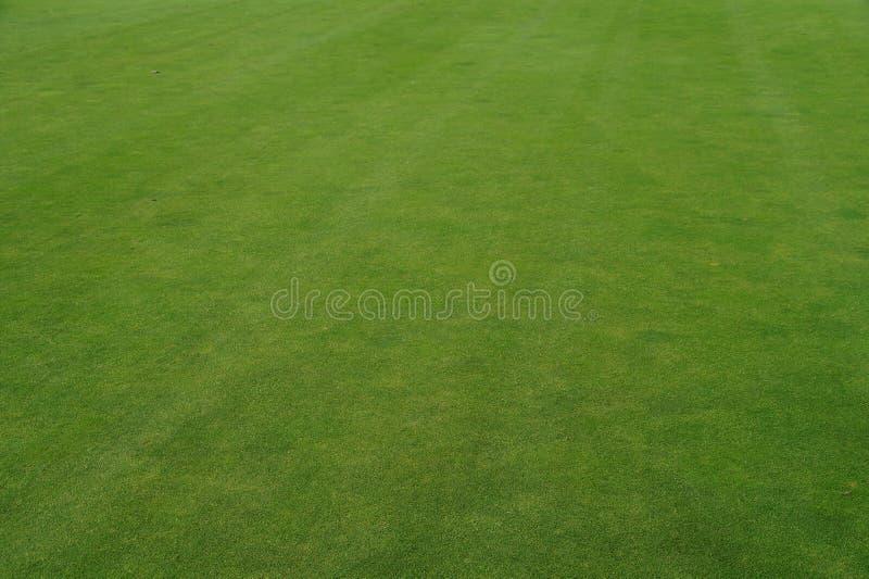 Textura real del verde del césped del golf - hierba foto de archivo