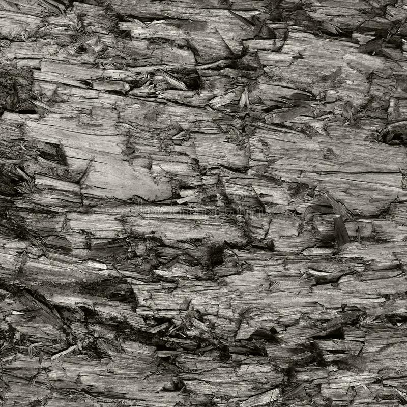 Textura resistida natural do coto de Grey Taupe Brown Cut Tree, grande Gray Lumber Background Wood destruído danificado ferido de imagens de stock