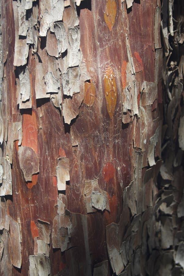 Textura roja de la corteza de árbol fotos de archivo