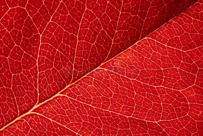 Textura roja de la hoja imagenes de archivo