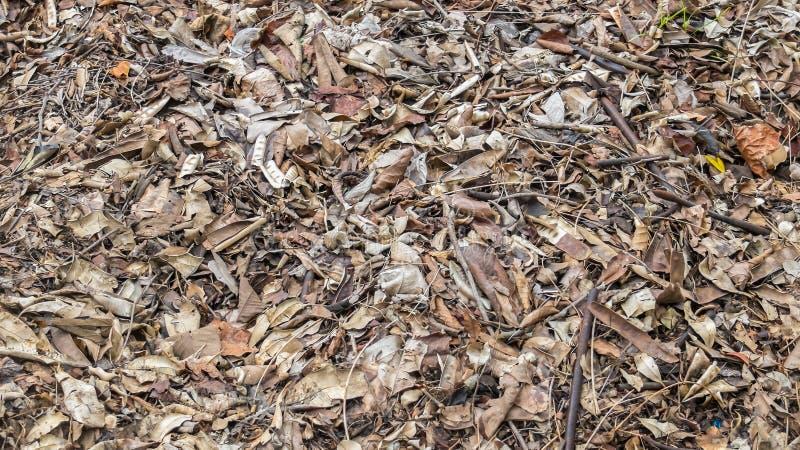 Textura seca caída do fundo das folhas de Brown foto de stock