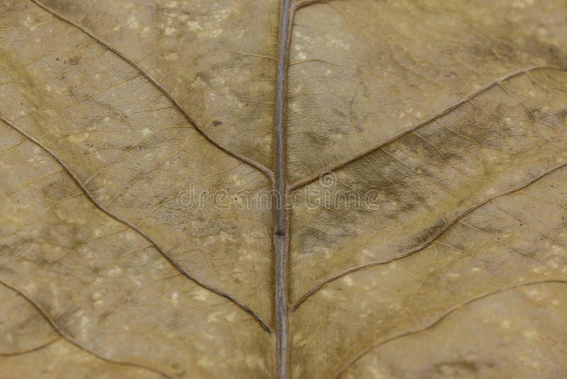 Textura seca da folha foto de stock