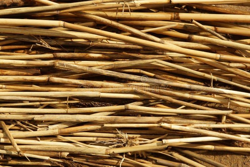 Textura seca de las cañas Papel pintado orgánico de la naturaleza del bastón amarillo foto de archivo libre de regalías