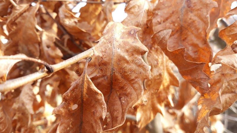 Textura seca de las hojas imágenes de archivo libres de regalías