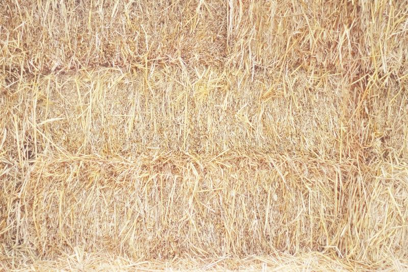 Textura secada da palha para o fundo, testes padrões rurais naturais fotografia de stock royalty free
