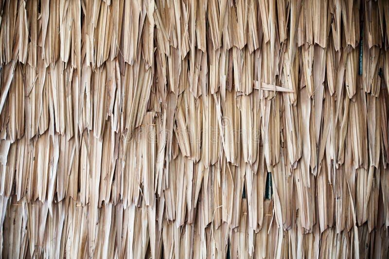 Textura secada de la palma imagenes de archivo