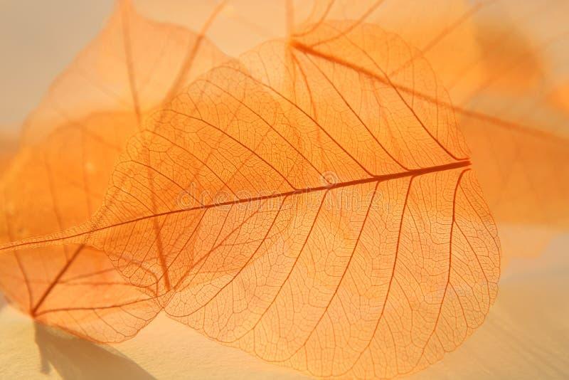 Textura secada de las hojas imágenes de archivo libres de regalías