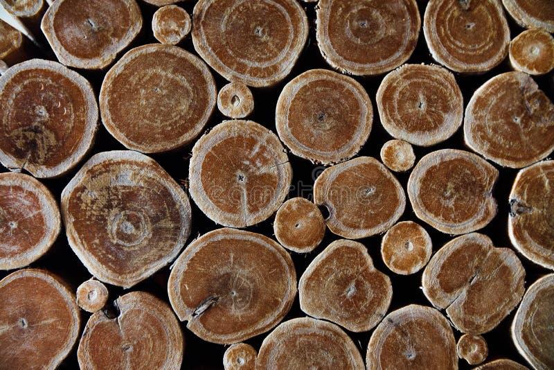 Textura seccionada transversalmente del árbol del fondo Fondo de madera Textura de madera de la pared imagen de archivo libre de regalías