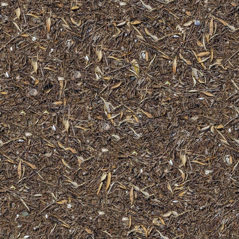 Textura sem emenda da terra com ervas secas. fotos de stock royalty free