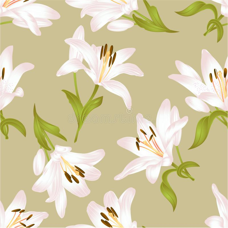 Textura sem emenda Lily Lilium branca candidum, flor com folhas e ilustração festiva do vetor do vintage do fundo do botão editáv ilustração royalty free