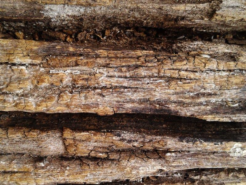 Textura superficial de madera silicified áspera Fondo de la foto foto de archivo