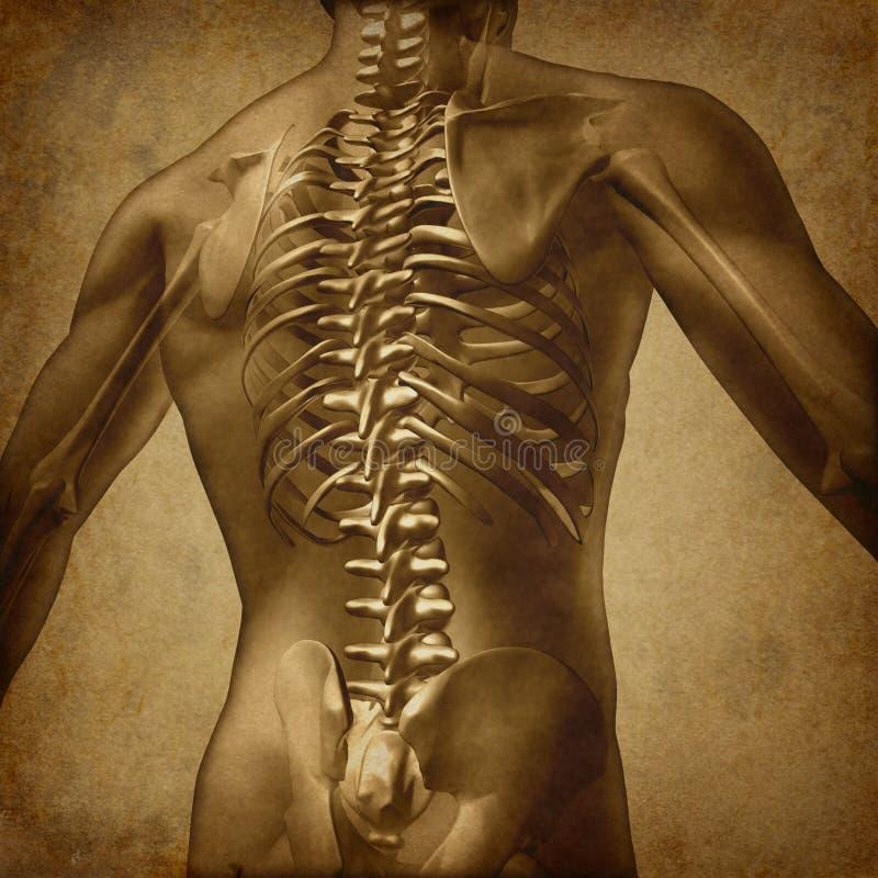 Textura traseira de Grunge do ser humano