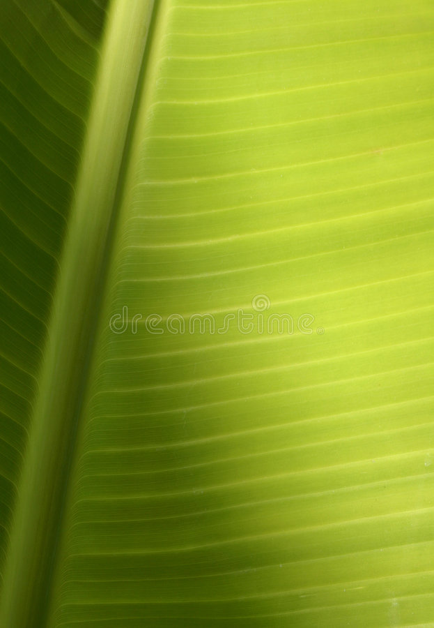 Textura tropical da folha fotos de stock