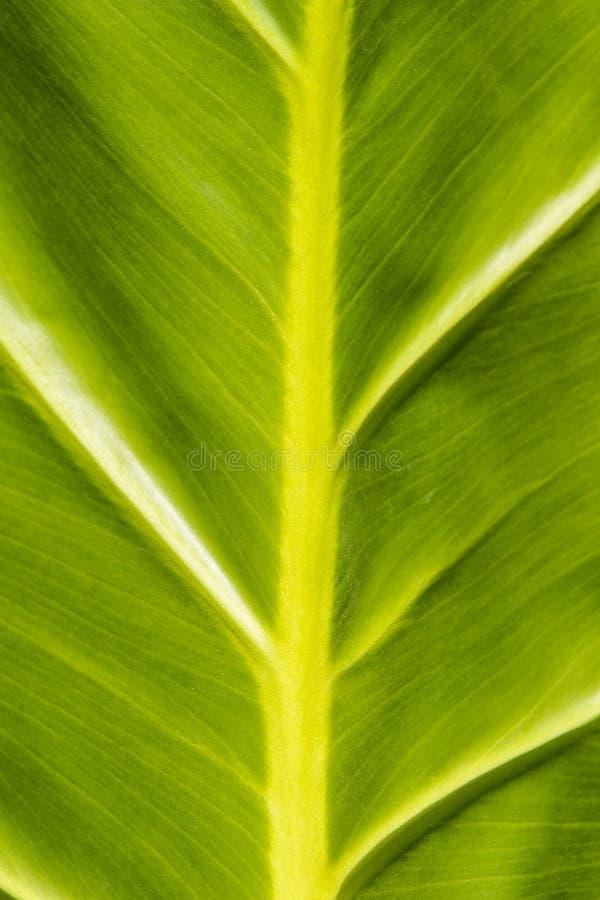 Textura tropical da folha fotos de stock royalty free