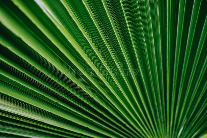 Textura tropical verde de la planta del fondo de las hojas de la palma imagen de archivo