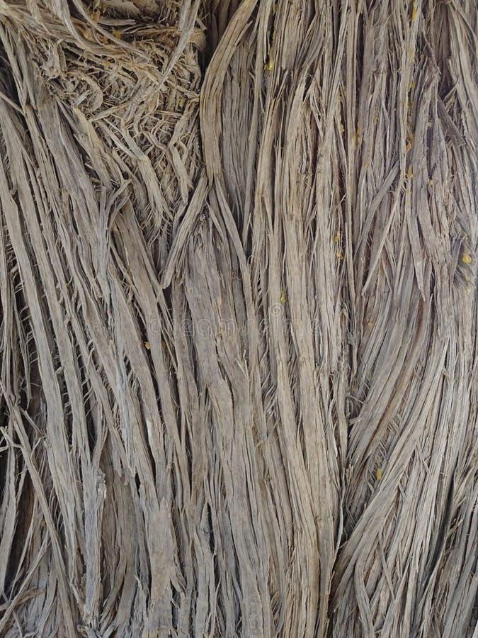 Textura vegetal fotografía de archivo