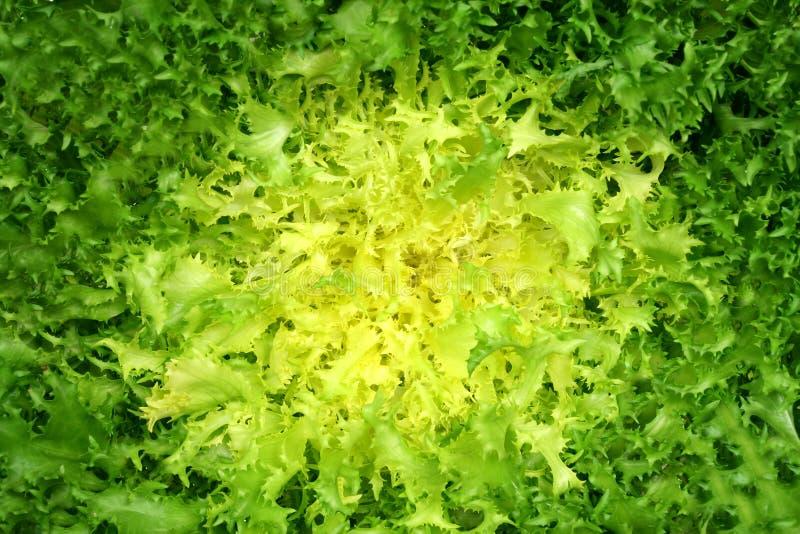 Textura vegetal fotografia de stock royalty free