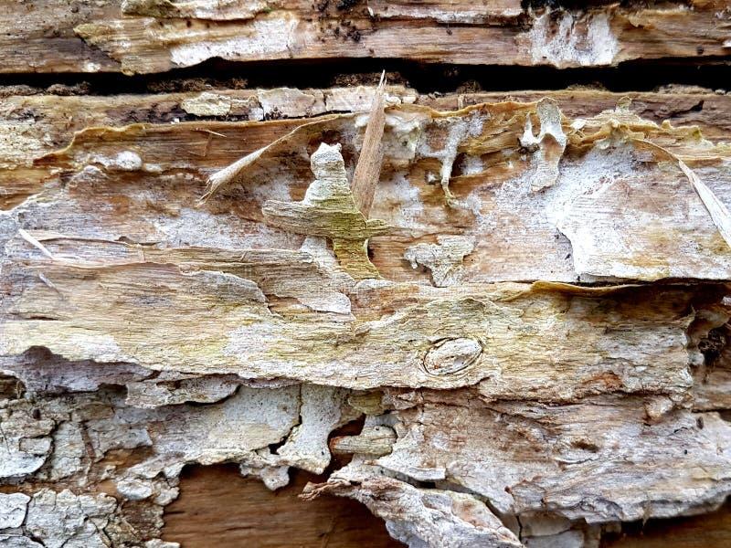 Textura velha da casca com quebra foto de stock royalty free