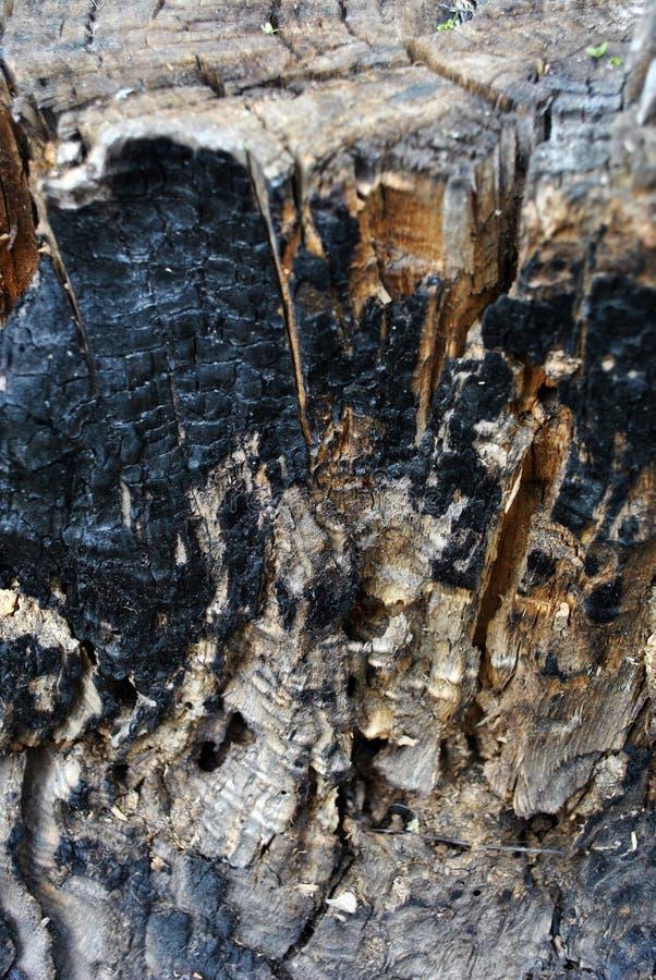 Textura velha queimada do tronco de árvore, fundo do grunge imagem de stock