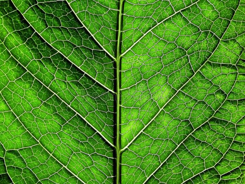 Textura verde fotos de stock royalty free