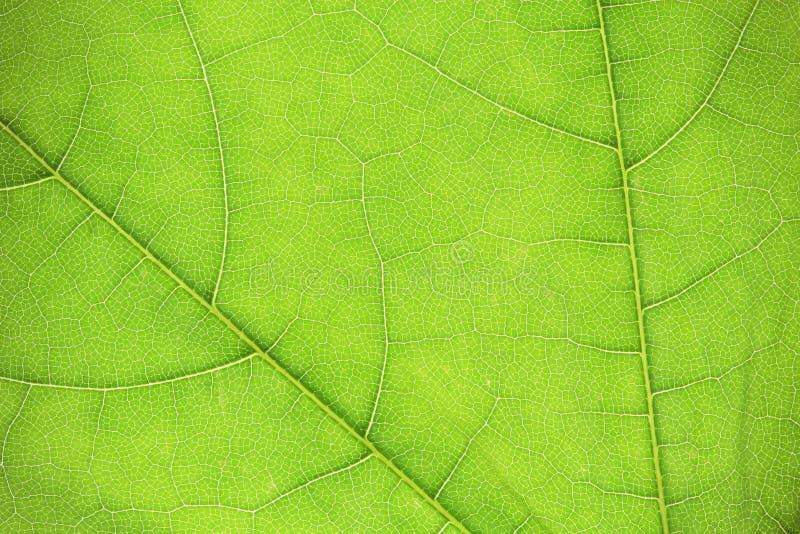 Textura verde abstracta de la hoja fotografía de archivo libre de regalías