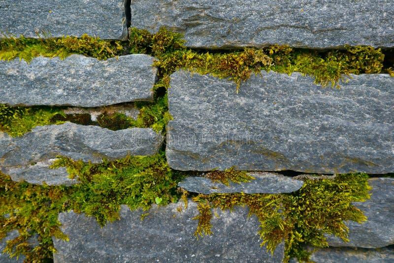 Textura verde clara del musgo en la pared de ladrillo de piedra Depicti de la foto imágenes de archivo libres de regalías