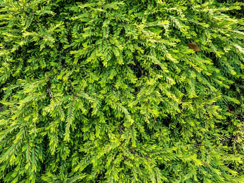 Textura verde da folha foto de stock royalty free