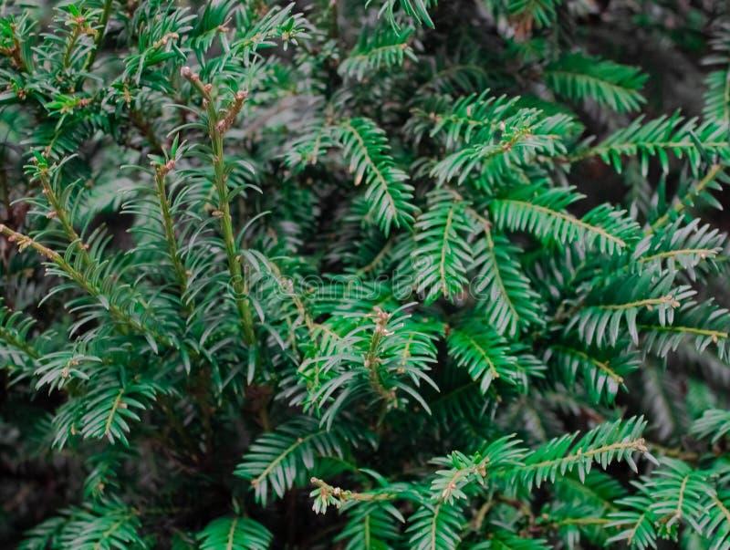 Textura verde da folha Fundo da textura da folha Teste padrão bonito para a bandeira com uma planta verde Conceito da natureza ilustração royalty free