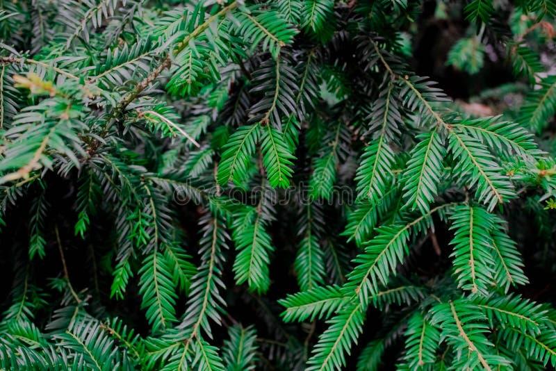 Textura verde da folha Fundo da textura da folha Teste padrão bonito para a bandeira com uma planta verde Conceito da natureza ilustração do vetor