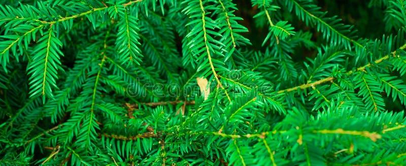 Textura verde da folha Fundo da textura da folha Teste padr?o bonito para a bandeira com uma planta verde Conceito da natureza ilustração royalty free