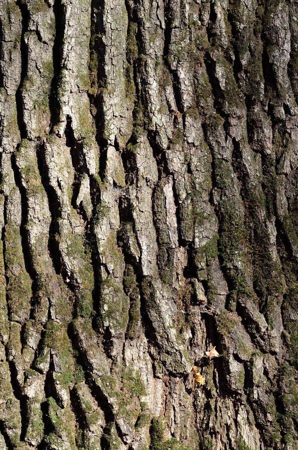 Textura verde de la corteza de árbol foto de archivo