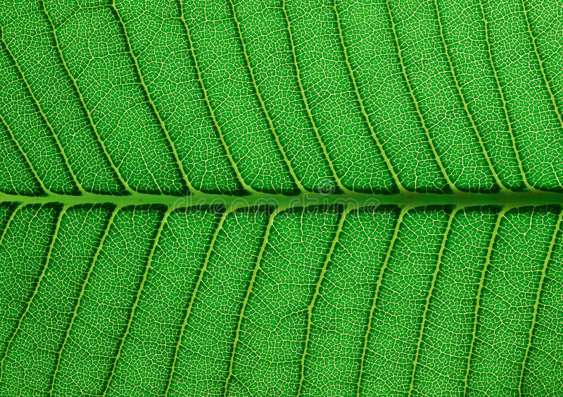 Download Textura verde de la hoja imagen de archivo. Imagen de travieso - 44851397