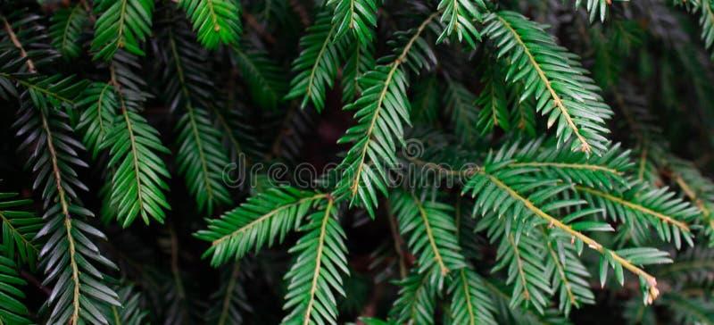 Textura verde de la hoja Fondo de la textura de la hoja Modelo hermoso para la bandera con una planta verde Concepto de la natura foto de archivo libre de regalías