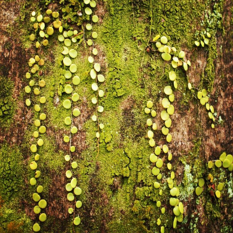 Textura verde de un árbol imagen de archivo