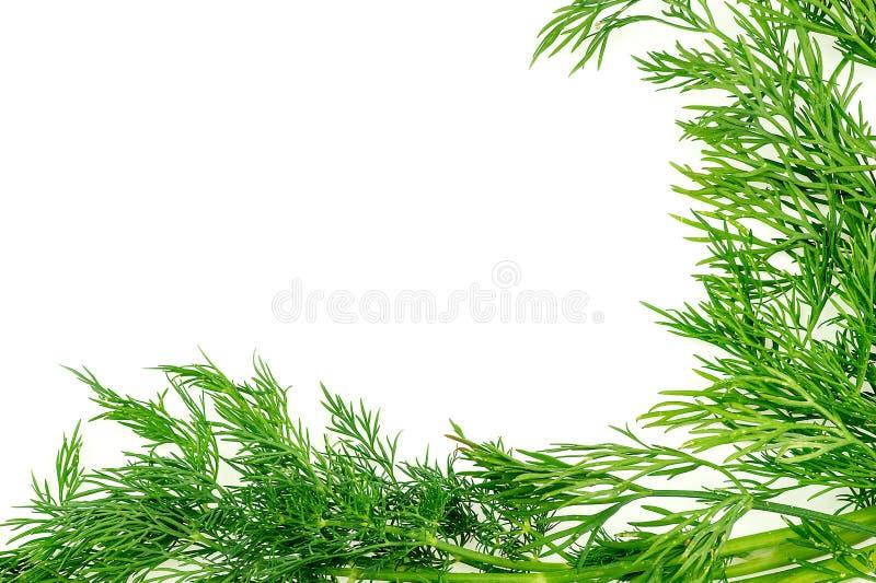 Textura verde do fundo com a erva orgânica fresca do aneto com copys fotografia de stock