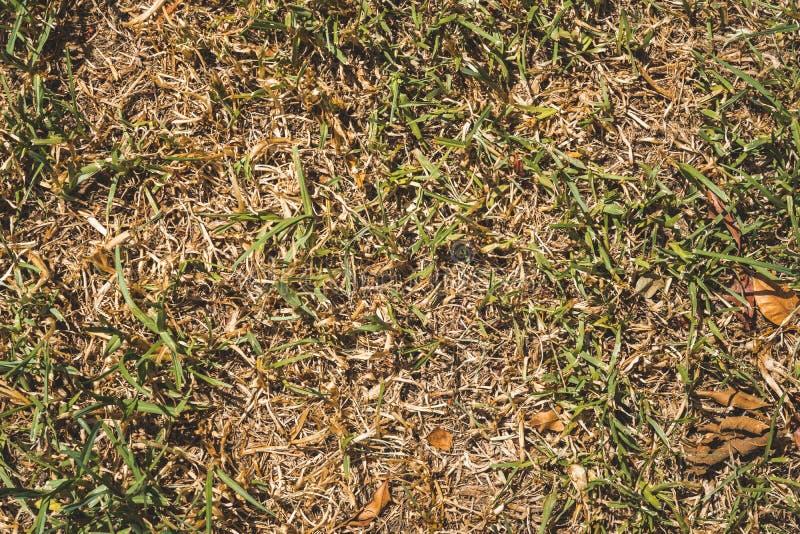 Textura verde e amarela da grama exterior imagens de stock royalty free