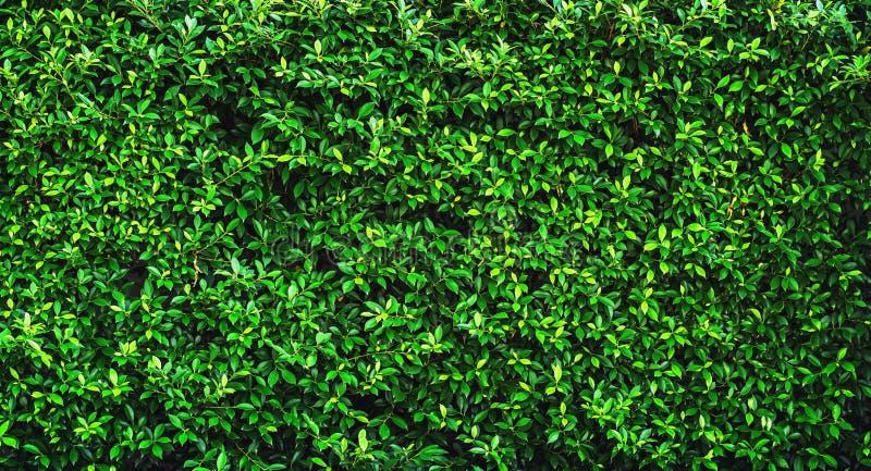 textura verde fresca do fundo da licença imagens de stock royalty free