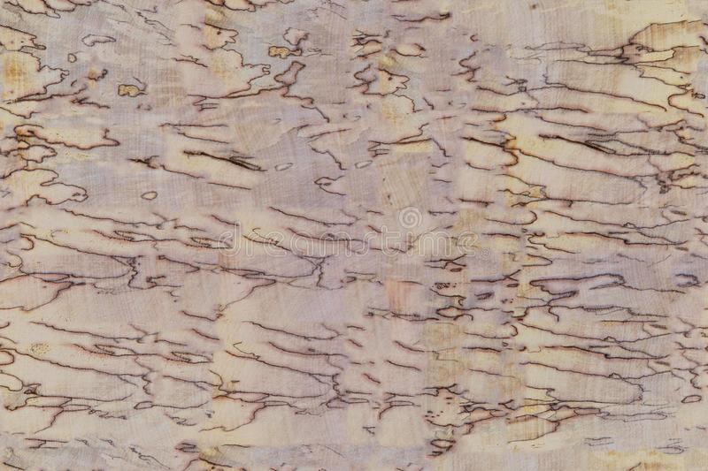 Textural background from an old natural wooden table. Solid wood texture. Textural background from royalty free stock photos