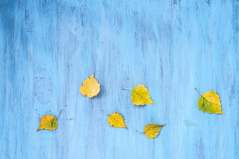 Textural background painted with blue paint with composition of colorful maple autumn leaves.. Top veiw, copy space stock photo