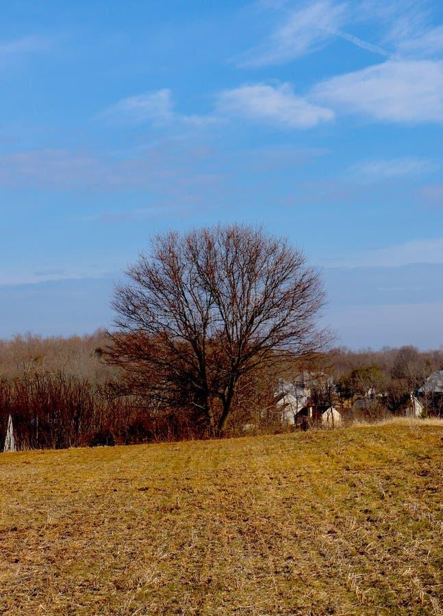 Texturas abundante nisto cênico da terra de rolamento com sugestão da floresta e das casas abaixo imagem de stock