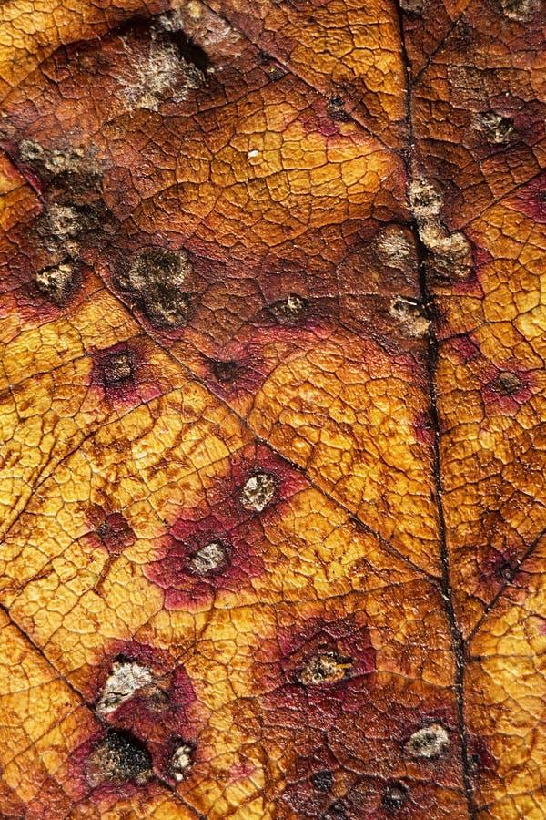 Texturas da folha do outono fotos de stock