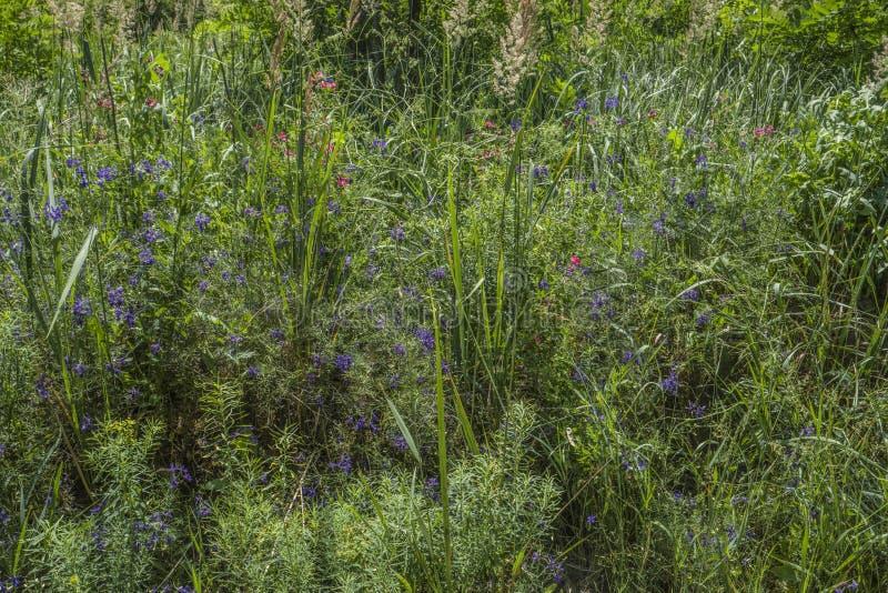 Texturas de fundo da relva verde fotografia de stock