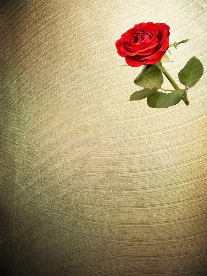 Texturas de papel vermelhas de Rosa da flor. imagens de stock