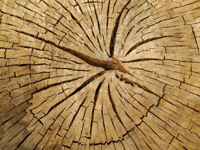 Texturas del árbol cortado con las grietas foto de archivo
