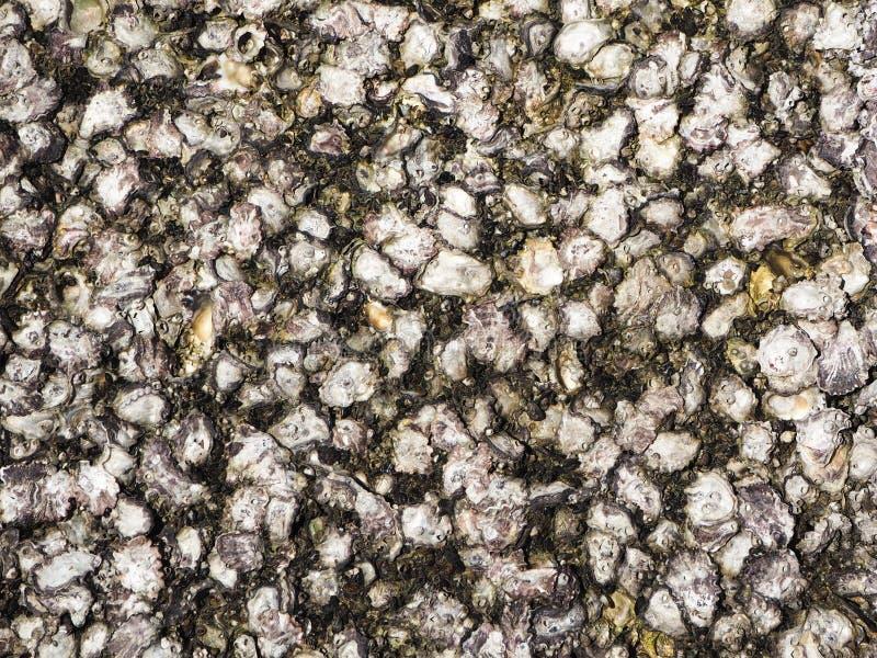 Texturas del fósil de Shell foto de archivo libre de regalías