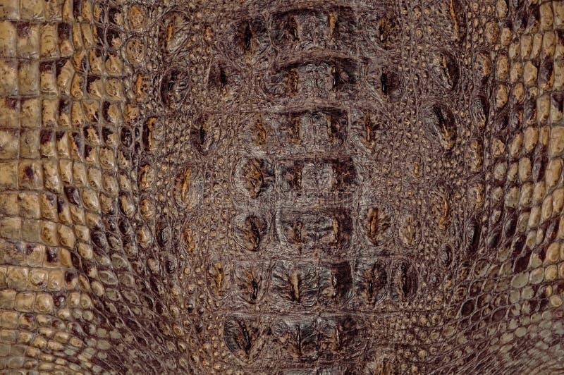 Texturas del fondo de la piel del cocodrilo Primer reptiles Amarillo pardusco de la textura de cuero escamosa fotografía de archivo