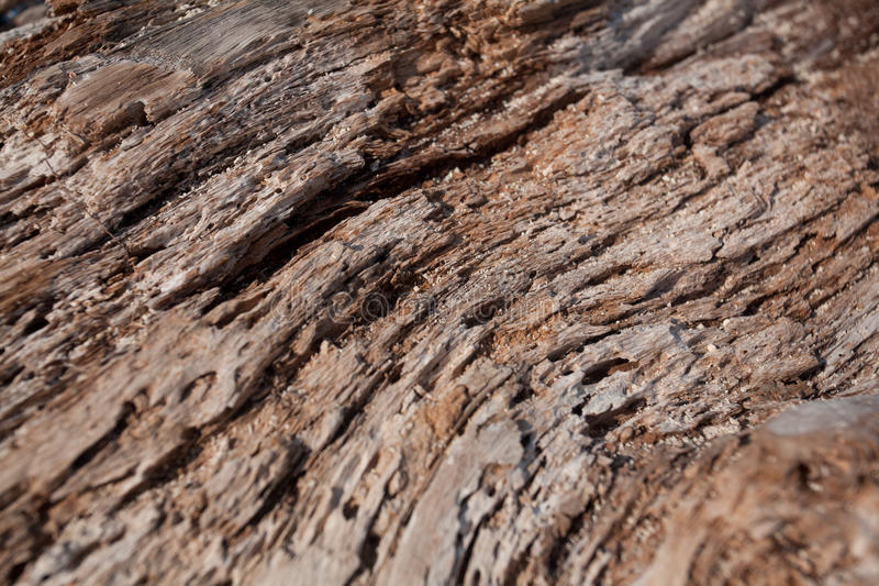 Texturas del tronco de árbol/de la madera secos imagen de archivo libre de regalías