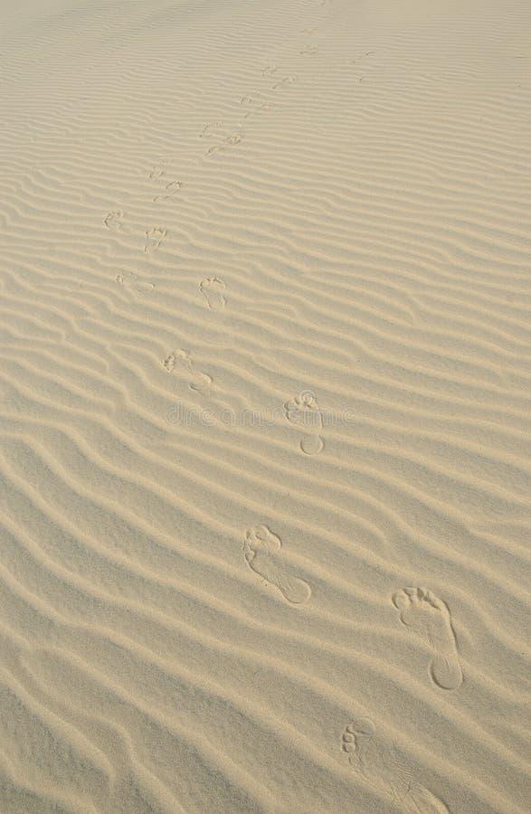 Texturas Do Deserto Fotos de Stock Royalty Free